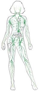 Το λεμφικό σύστημα στον ανθρώπινο σώμα